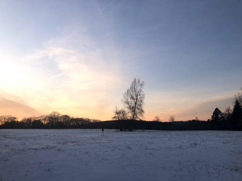 A field at sunset. The field is covered in a thin layer of snow. There is a single tree in the middle of the field, silhouetted against the gold and dark blue sky.